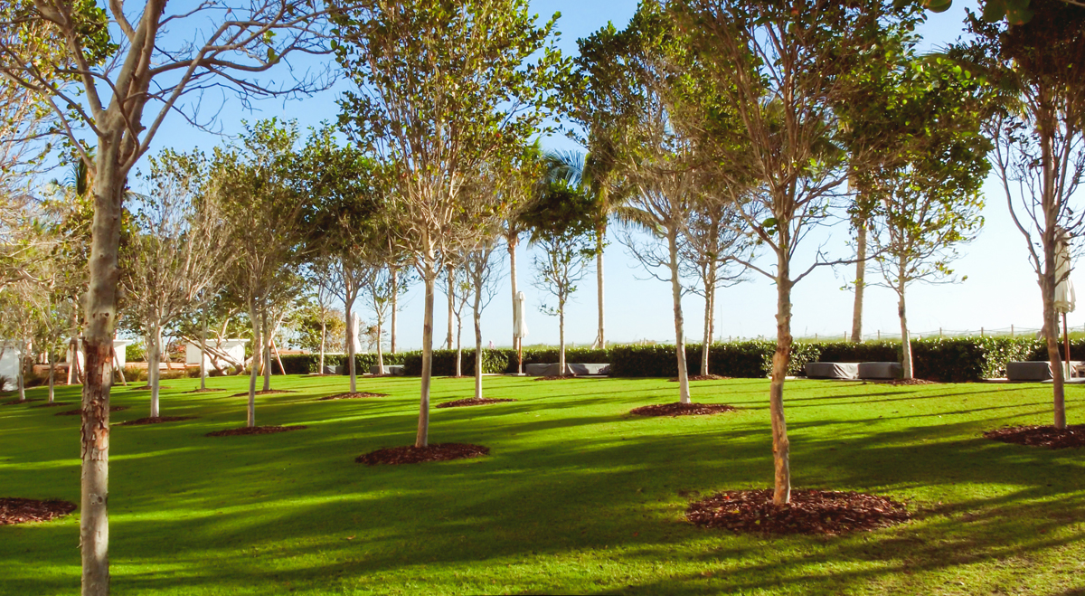 A view of The Surf Club Four Seasons tree-lined garden.